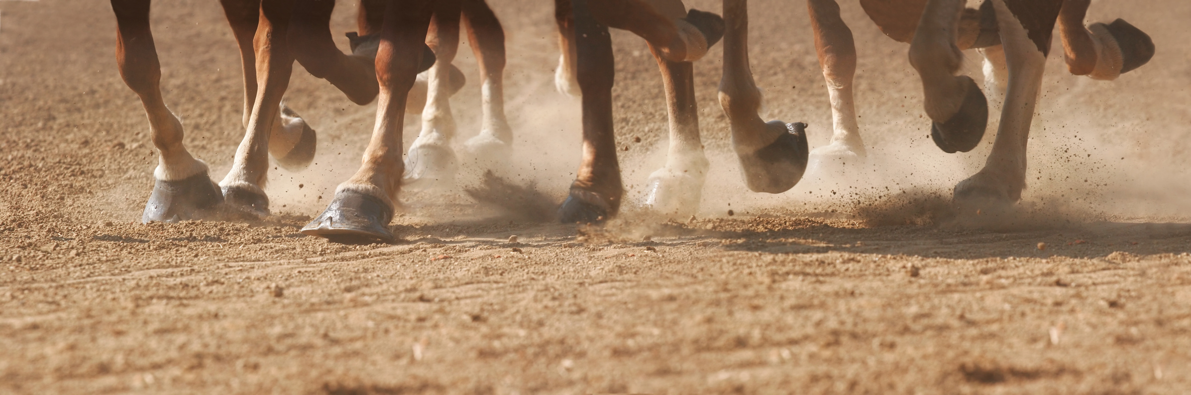horse hooves in fixed horse race
